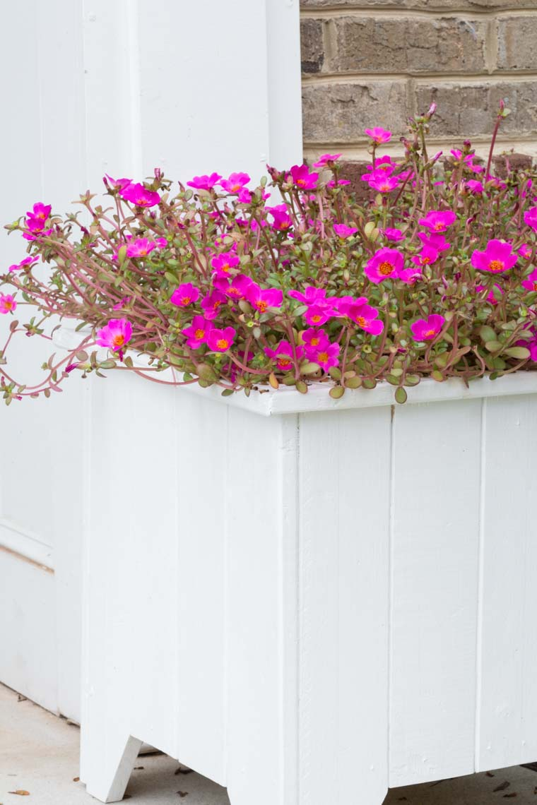 DIY Wooden Planter Box Painted White